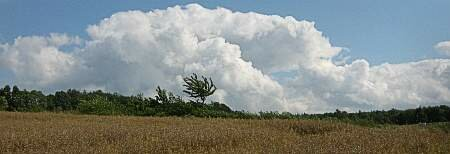Rapsfeld kurz nach Regen